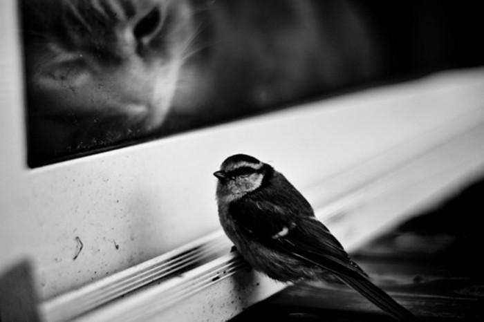 art-de-la-photographie-en-noir-et-blanc-apparence-chat-et-oiseau