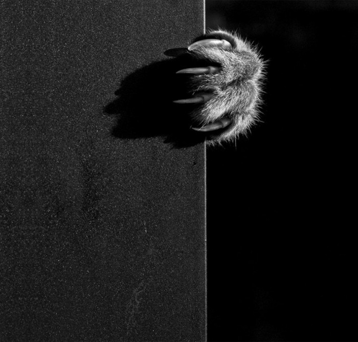 art-de-la-photographie-en-noir-et-blanc-apparence-la-patte