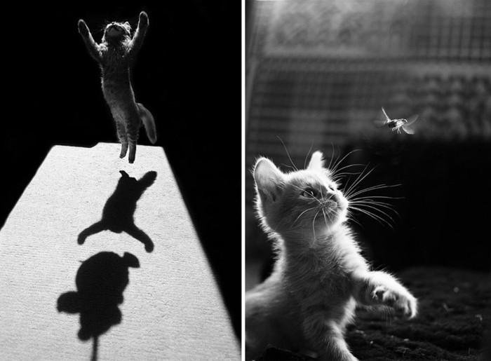 Super La photo artistique noir et blanc - choisir la meilleure de notre  RI15