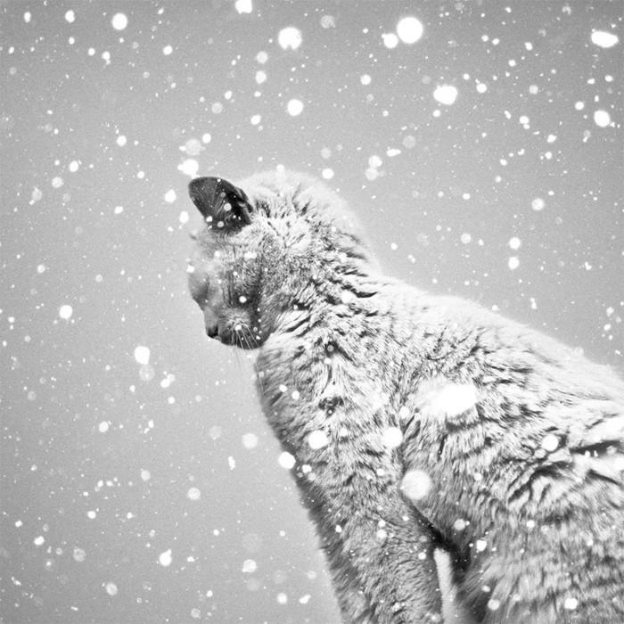 belle-photo-artistique-noir-et-blanc-image-chaton-sur-la-neige