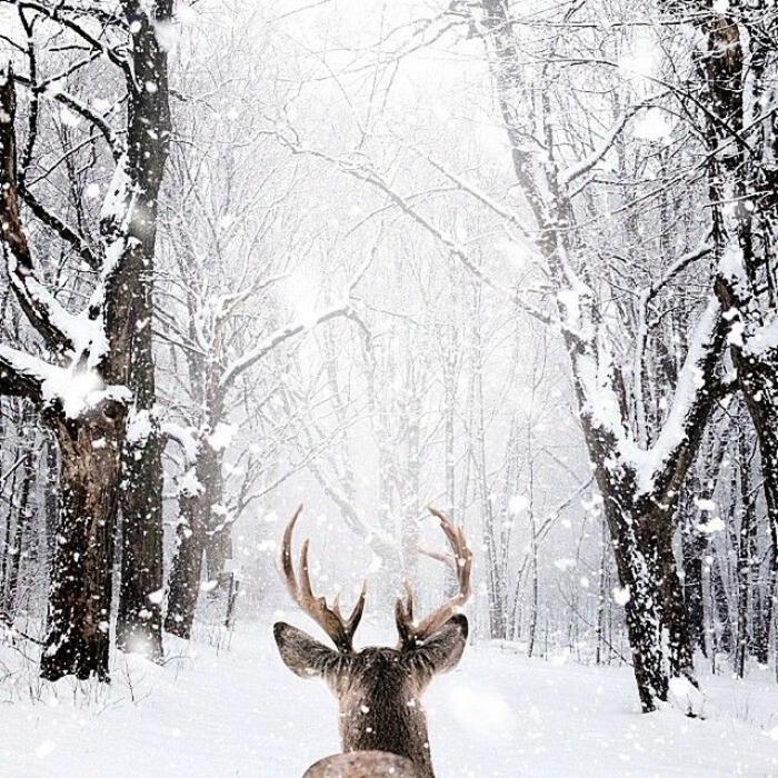 Le paysage d 39 hiver en 80 images magnifiques for Fond ecran hiver animaux