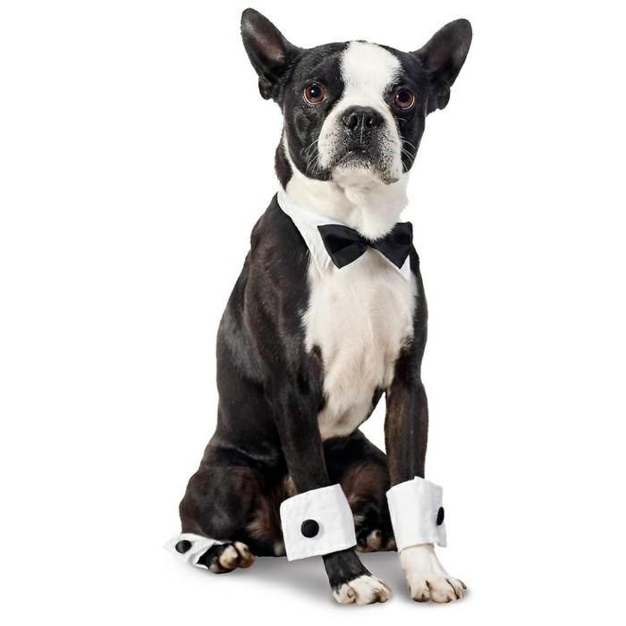 chien-noel-chihuahua-pas-cher-vetêments-pour-chien-pas-cher