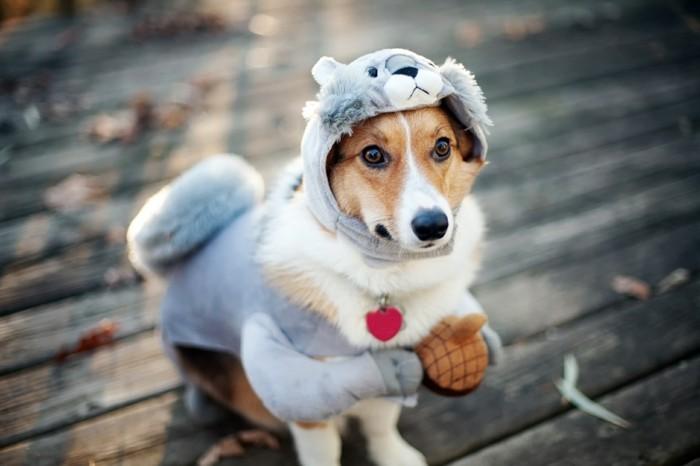 chien-noel-chihuahua-pas-cher-vetement-vetêments-pour-chien-pas-cher