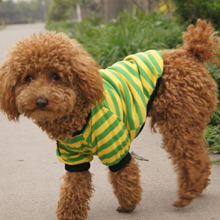chien-noel-chihuahua-vetement-pas-cher-vetement-pour-chien