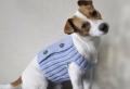 On vous présente vêtement pour chien en 40 photos remarquables!