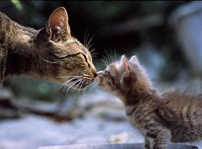 Les images de chaton mignon qui vont vous donner un grand sourire - Images de chats rigolos ...