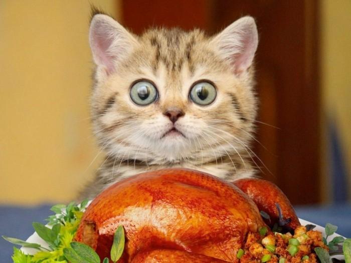 Préférence Les images de chaton mignon qui vont vous donner un grand sourire  MH42