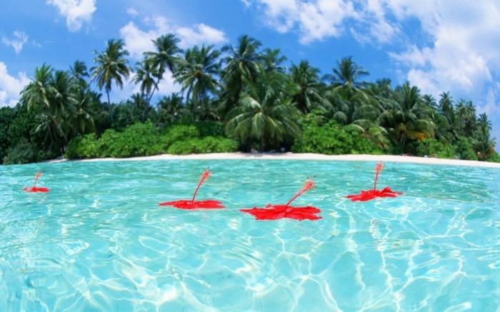 eau-mer-maldive-carte-que-faire-aux-maldives-nature-incroyable-beauté