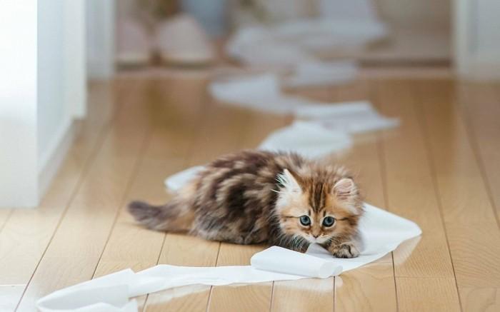 fond-ecran-chaton-la-plus-mignonne-image-chatons-images-de-chaton