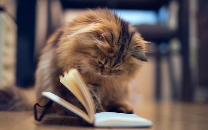 formidable-petit-chaton-trop-mignon-foto-de-chaton-a-la-lecture