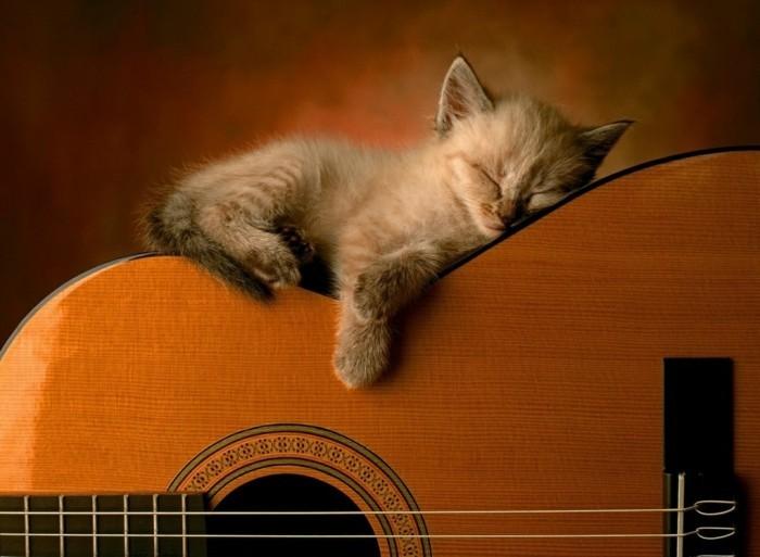 formidable-petit-chaton-trop-mignon-foto-de-chaton-adorable