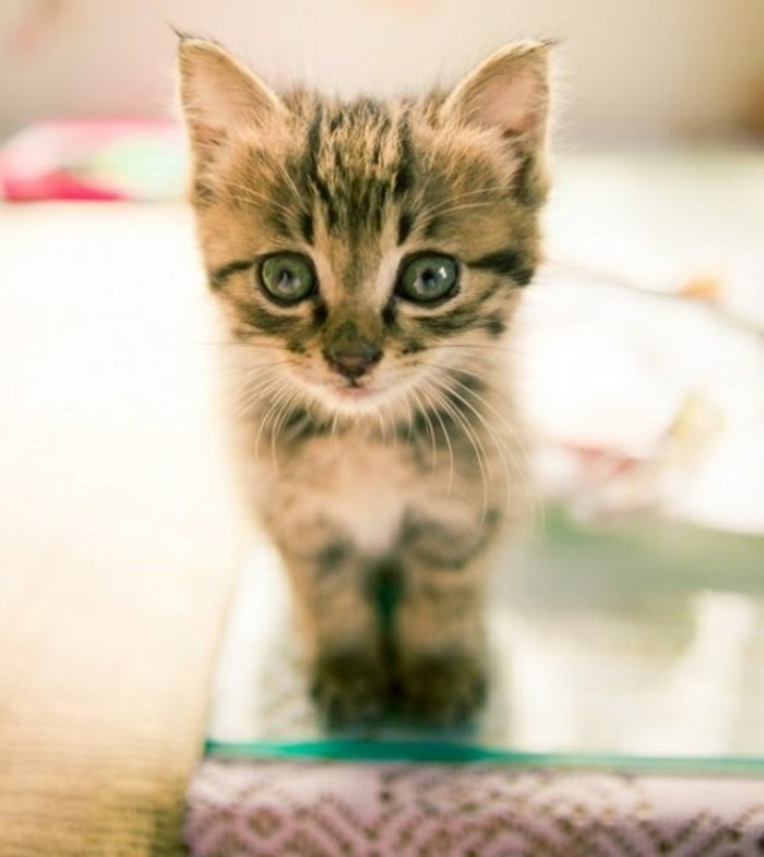 formidable-petit-chaton-trop-mignon-foto-de-chaton-mignon
