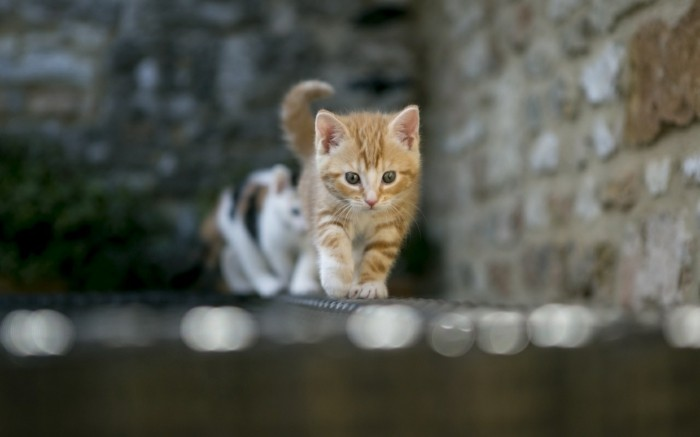 formidable-plus-adorable-photo-chaton-mignon-image-chaton-mignon