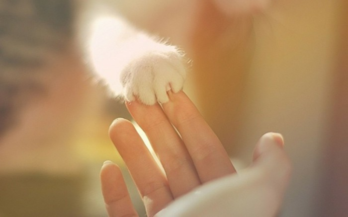 formidable-plus-mignon-chaton-petit-chaton-mignon-chaton-image