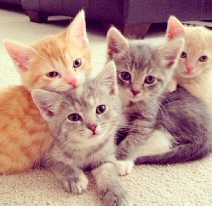 idée-chouettes-chatons-trop-mignons-les-photo-de-chat-trop-mignonne-image