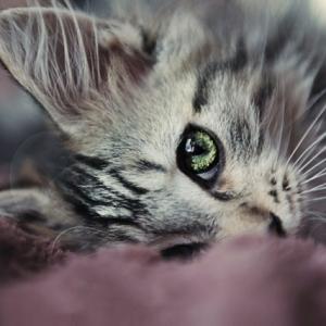 Les images de chaton mignon qui vont vous donner un grand sourire!