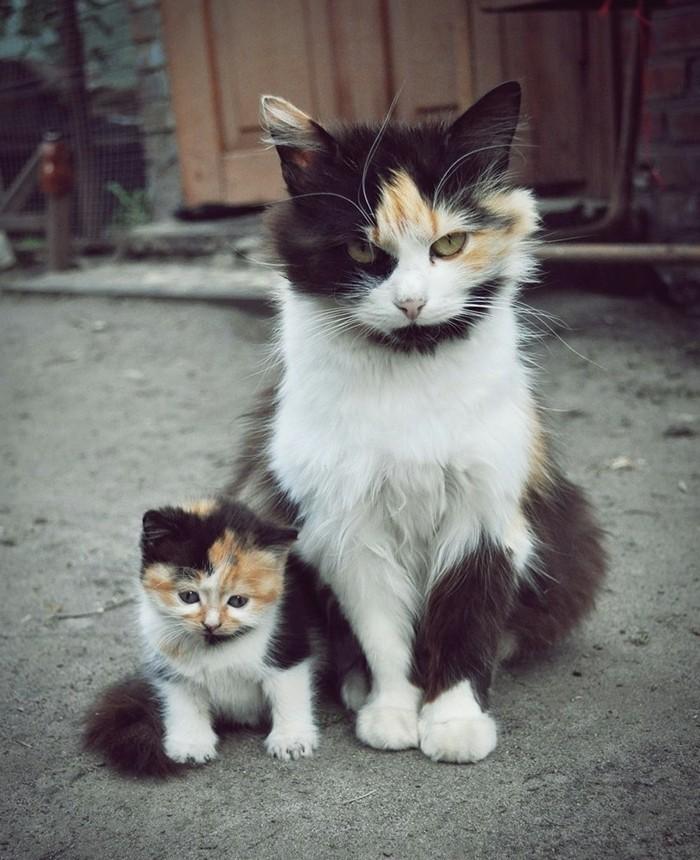 image-de-chaton-trop-mignon-chatons-mignons-amusant