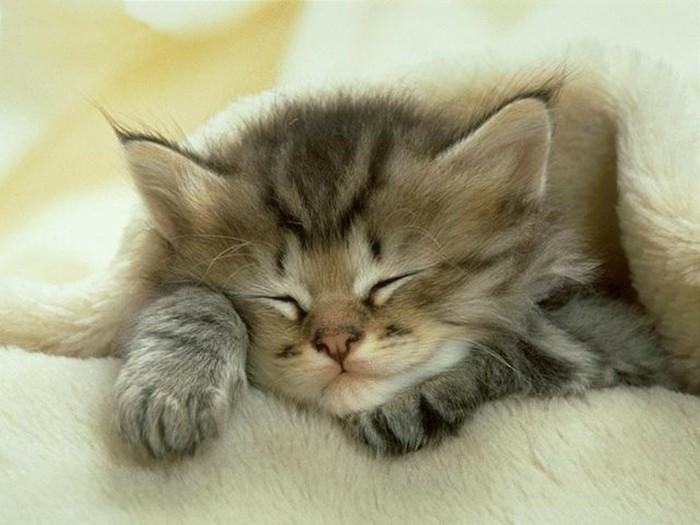 Les images de chaton mignon qui vont vous donner un grand sourire - Image de chaton trop mimi ...