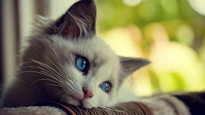 image-de-petit-chaton-image-chaton-drole-photo-de-chaton-tristesse