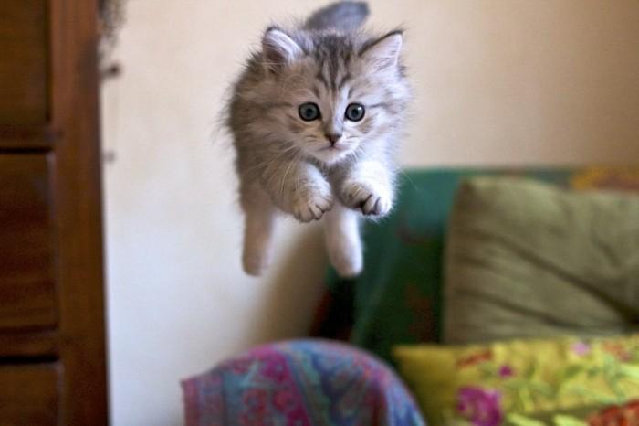 image-les-chatons-mignons-chaton-trop-mignon-chat-adorable-le-vol