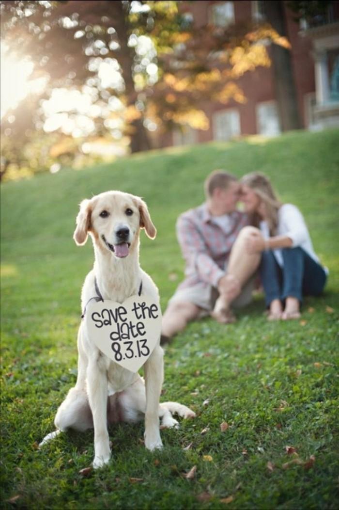image-mariage-humour-photos-de-mariée-photographie-chien-mignon