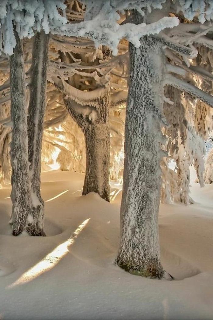 incroyable-photo-paysage-magnifique-fond-d-écran-paysage-d-hiver-arbre