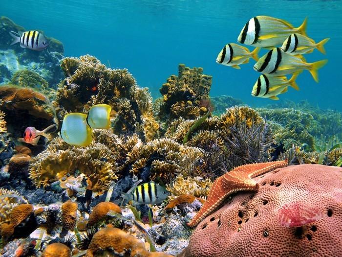 kuoni-maldives-malé-maldives-sejour-aux-maldives-coral-reef