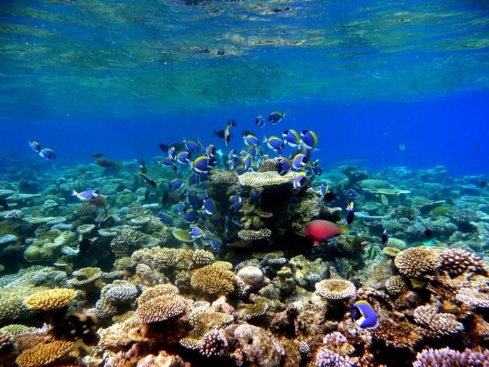 kuoni-maldives-malé-maldives-sejour-aux-maldives-reefs-vacances-maldives