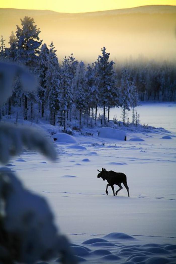 l-arriere-plan-noelmontagne-hiver-photo-paysage-neige-nature