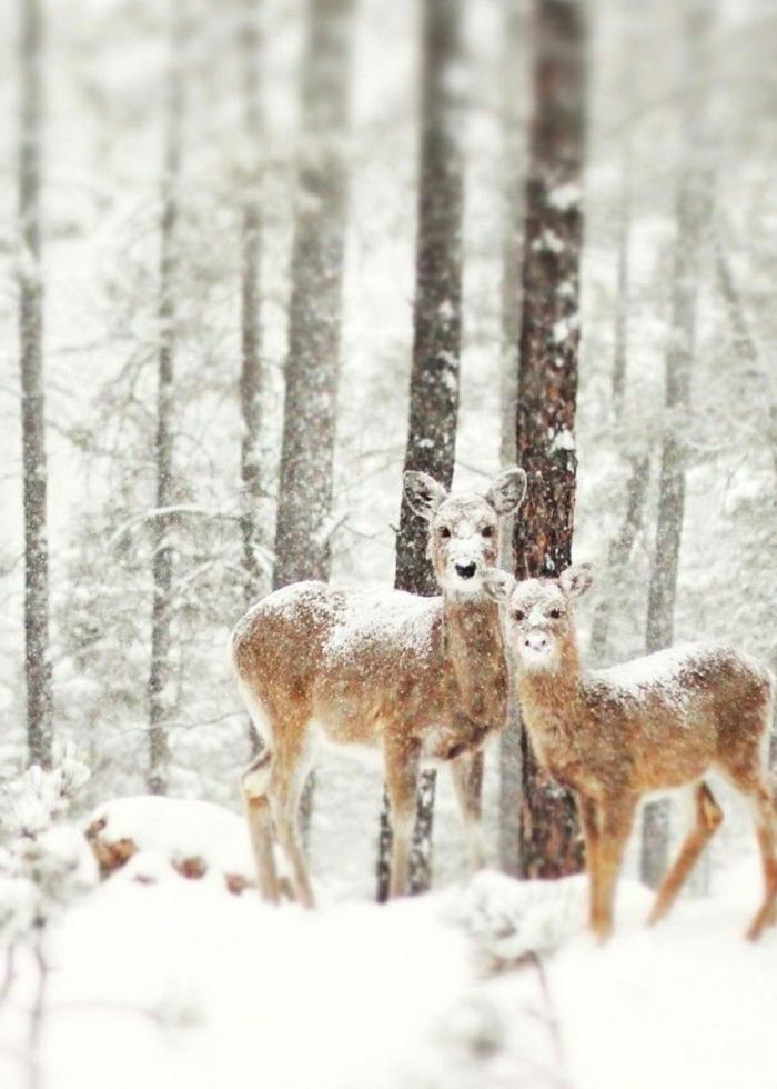 l-arriere-plan-noelmontagne-hiver-photo-paysage-neige-voir