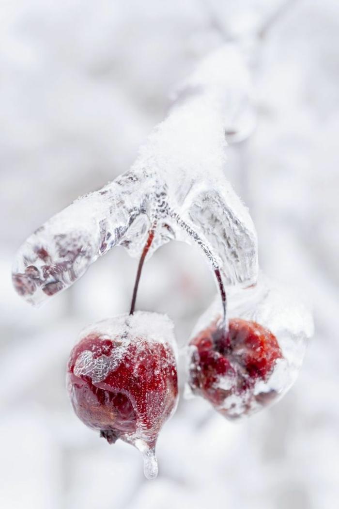 l-image-neige-paysages-de-neige-photo-d-hiver-glace