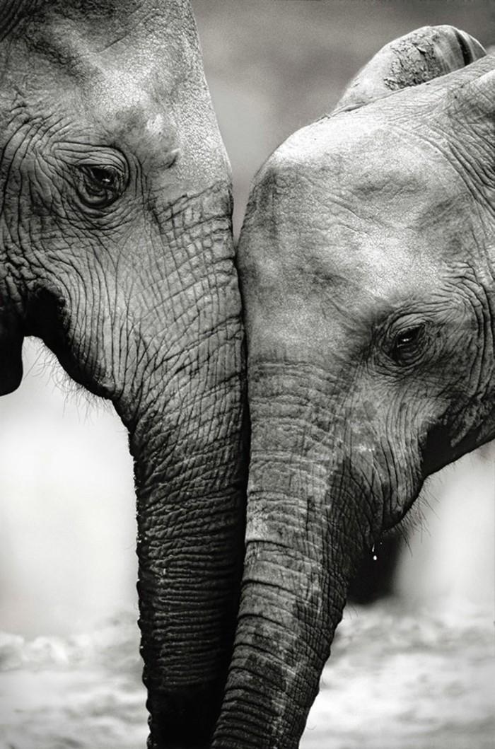 Souvent La photo artistique noir et blanc - choisir la meilleure de notre  EZ37