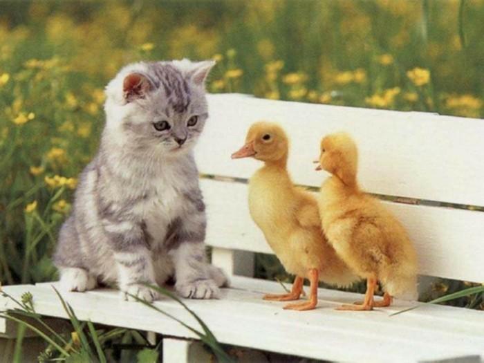 le-chaton-mignon-coloriage-chaton-mignon-cool-photographie-chicks