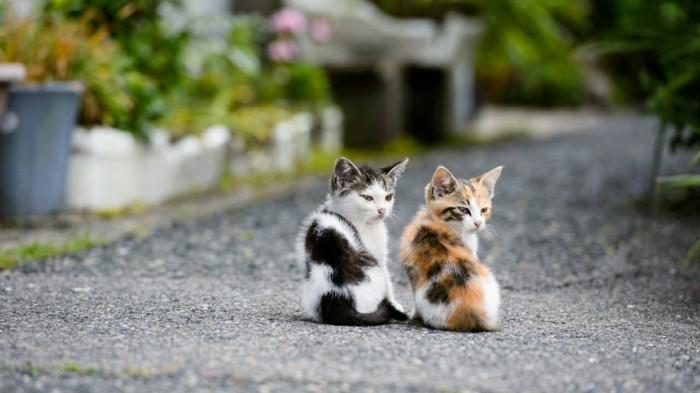 le-chaton-mignon-coloriage-chaton-mignon-cool-photographie-deux-chatons-mignons