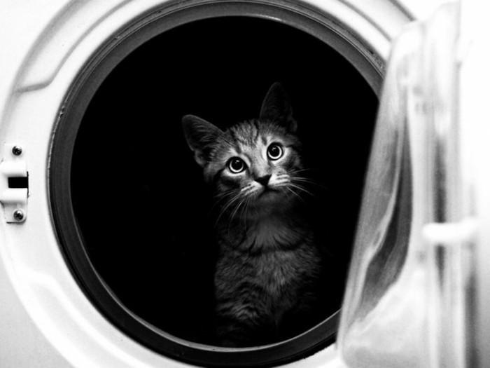 le-chaton-mignon-dans-la-veiselle-photo-de-blog-artiste-photographie-noir-et-banc