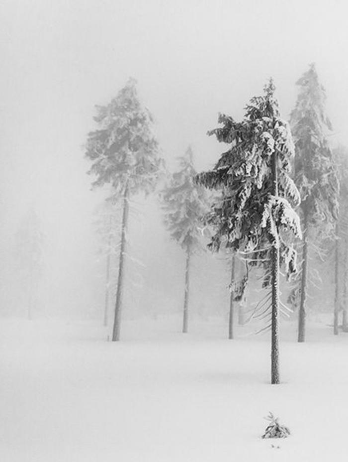 le-fond-d-ecran-neige-fond-d-ecran-montagne-sapin