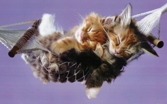 le-hammac-chat-formidable-petit-chaton-trop-mignon-foto-de-chaton