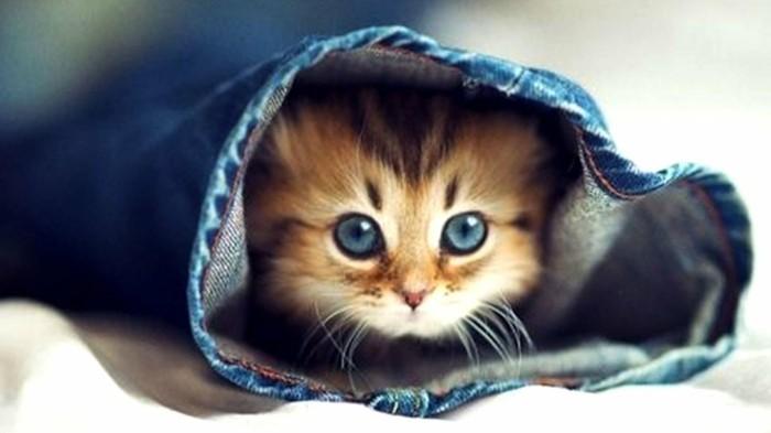 le-plus-mignon-chaton-petit-chaton-mignon-chaton-image