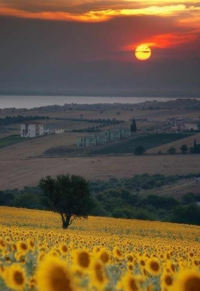 les-champs-d-italie-toscane-tournesols-agritourisme-toscane-italie-visiter-italie