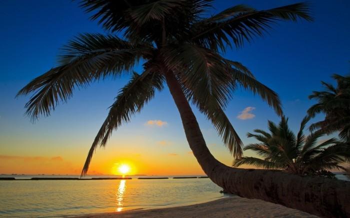 les-maldives-situation-geographique-voyage-maldive-palmes