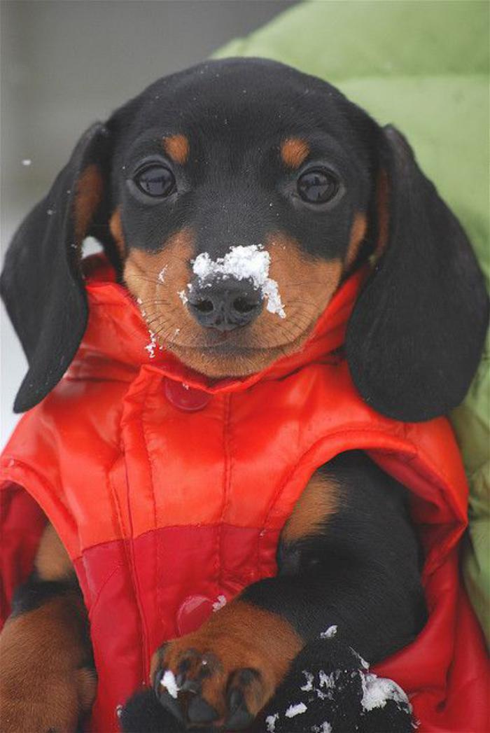 manteau-pour-chien-accessoire-chien-design