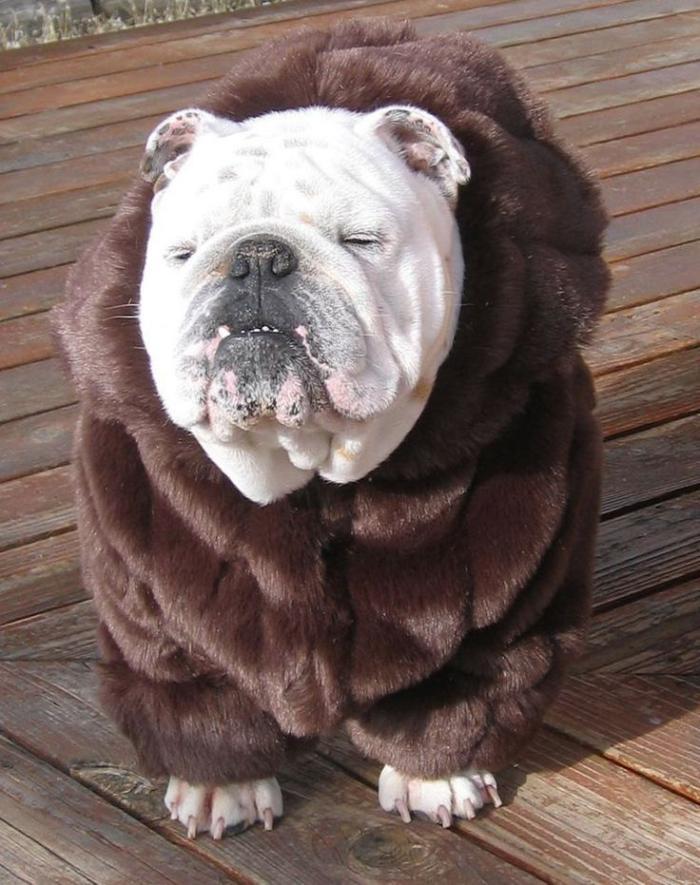 manteau-pour-chien-accessoires-pour-chiens