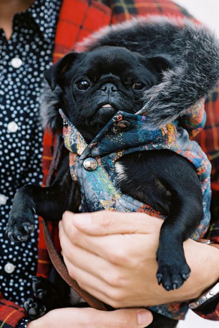manteau-pour-chien-avec-tout-le-confort-nécessaire
