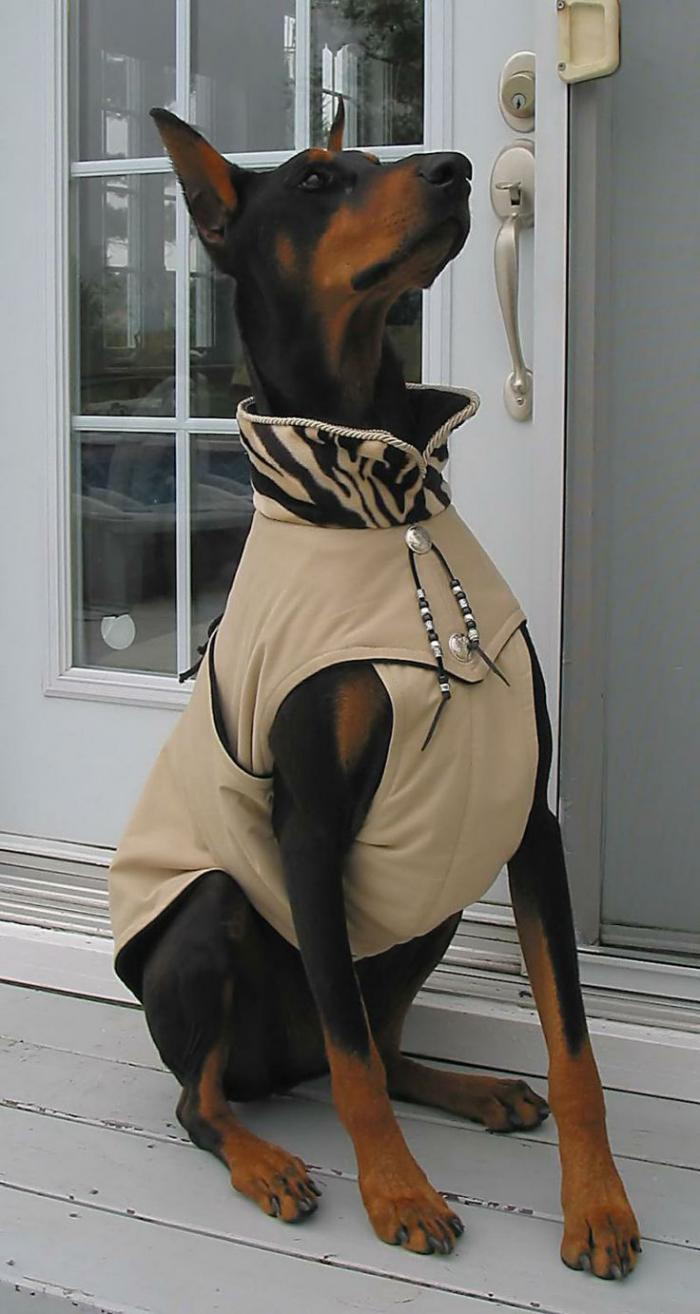 manteau-pour-chien-beige-style-pour-les-chiens-grands