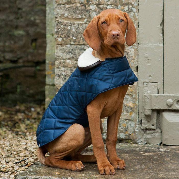 manteau-pour-chien-bleu-accessoire-pour-chien