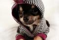 Quel manteau pour chien pour votre ami à quatre pattes