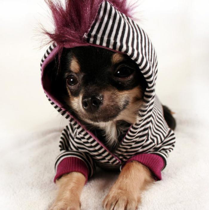 manteau-pour-chien-capuche-avec-fausse-fourrure