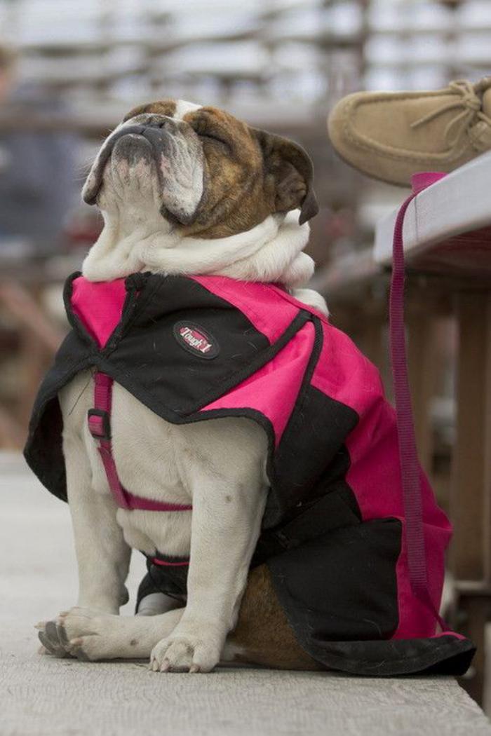 manteau-pour-chien-confort-pour-votre-ami-à-quatre-pattes