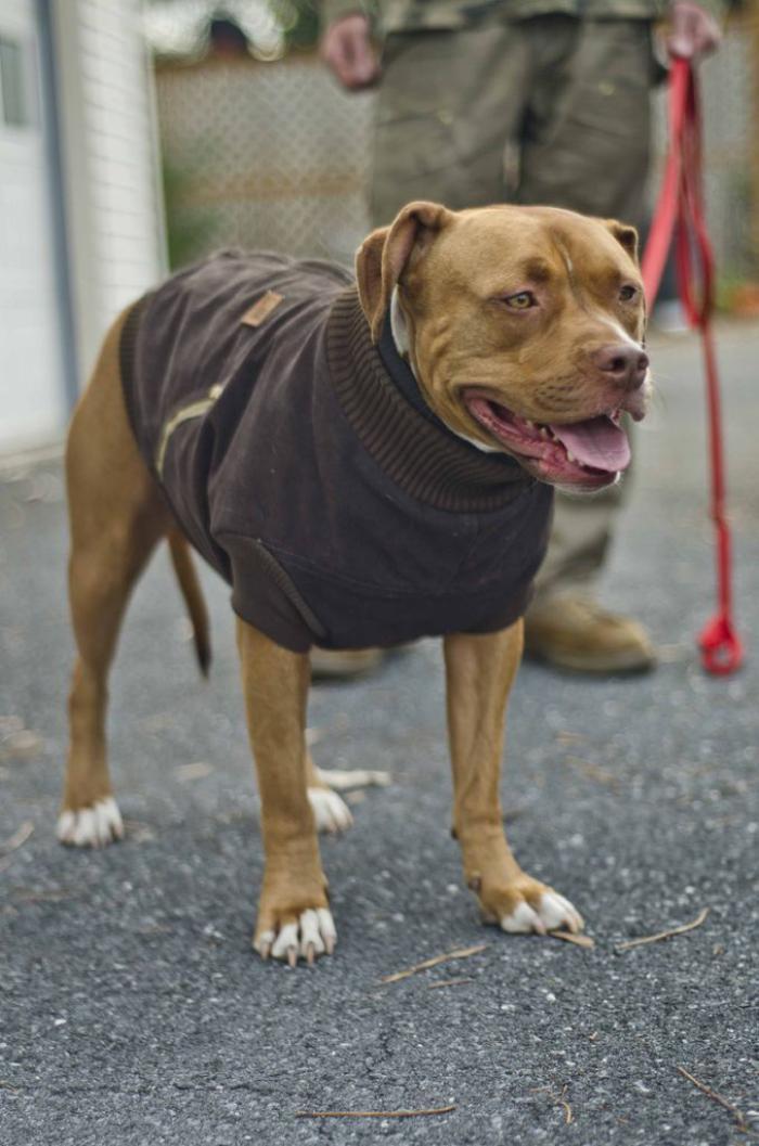 manteau-pour-chien-en-textile-manteaux-chiens-originaux