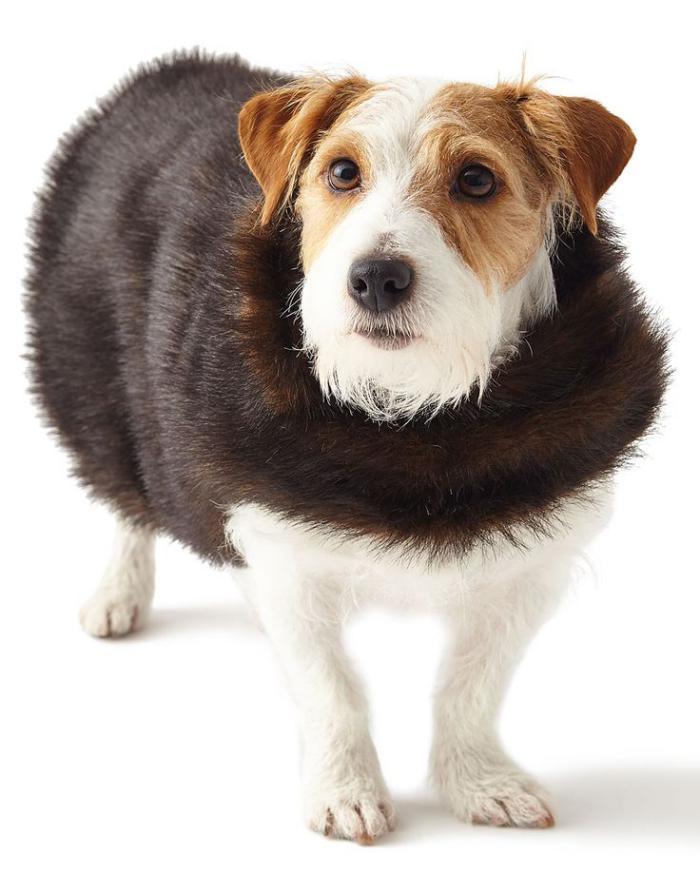 manteau-pour-chien-fausse-fourrure-marronne
